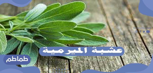 عشبة الميرمية .. استخدامات عشبة الميرمية للشعر والبشرة