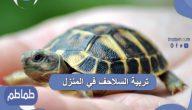 تربية السلاحف في المنزل