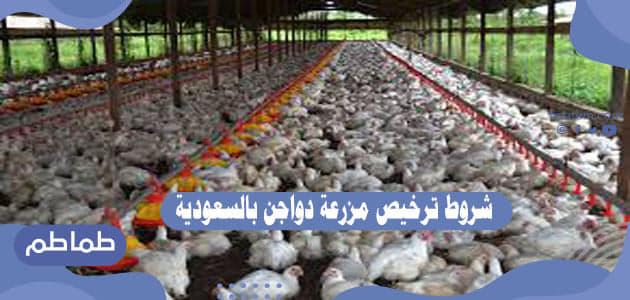 شروط ترخيص مزرعة دواجن بالسعودية .. تفاصيل مشروع مزرعة دواجن